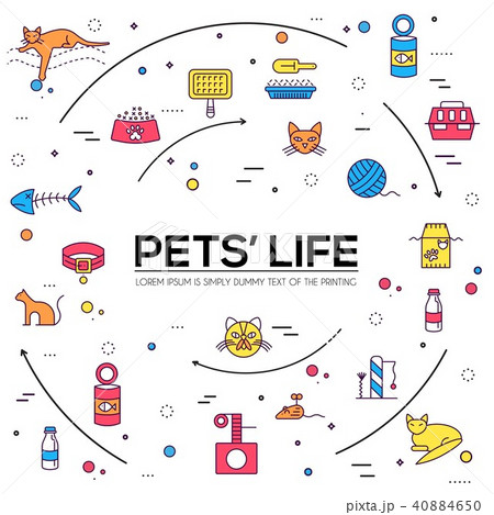 Vector line breed cats icons set. Cute outline 40884650