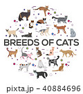 Vector breed cats icons circle set. Cute animal  40884696