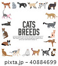 Vector breed cats icons set. Cute animal  40884699