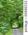砂利道 道 一本道の写真 40886532