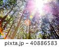 新緑 太陽光 快晴の写真 40886583