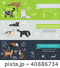 Vector breed cats icons banners. Cute animal  40886734