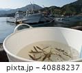 鯵 魚釣り アジ 40888237