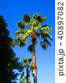 ヤシの木と青空の風景 40897082