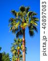 ヤシの木と青空の風景 40897083