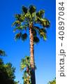 ヤシの木と青空の風景 40897084
