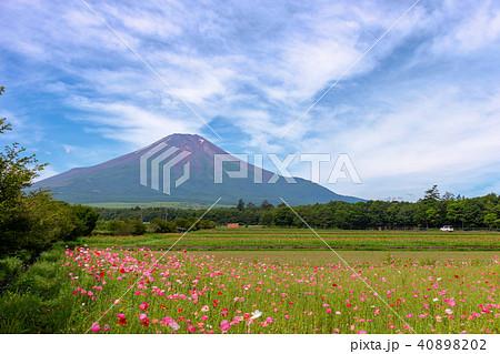富士山 (7月 花の都公園) 40898202