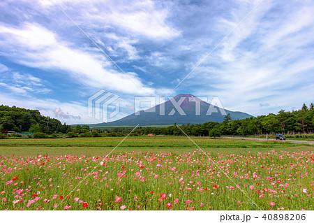 富士山 (7月 花の都公園) 40898206