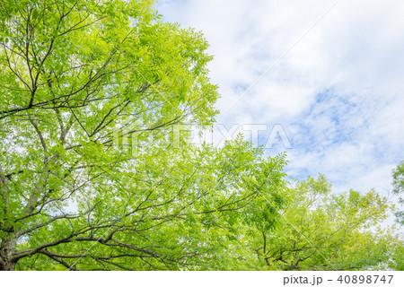 新緑の木と空と雲 40898747