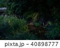 ホタル 鈴鹿ホタルの里 ゲンジボタルの写真 40898777