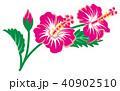 ハイビスカス ピンク 花のイラスト 40902510