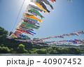 相模川鯉のぼり 40907452