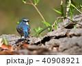 薬師池公園の野鳥 40908921
