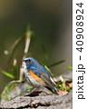 薬師池公園の野鳥 40908924