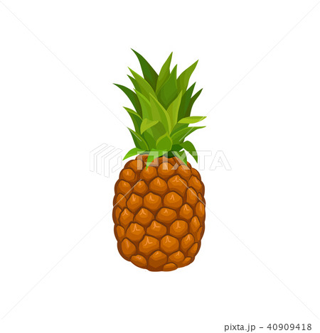 Whole pineapple with tuft of green stiff leaves. Tasty tropical fruit. Detailed flat vector element 40909418