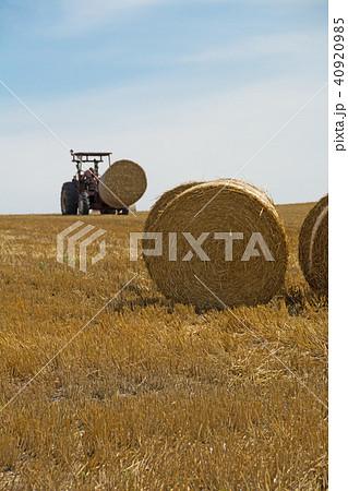 刈り取りが終わったムギ畑と麦稈ロール 40920985