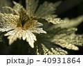 金 黄金 金色の写真 40931864
