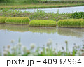 水田 田 苗の写真 40932964