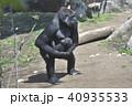 ゴリラの親子 40935533