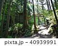 新緑 御岳山 天狗の腰掛け杉の写真 40939991