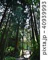 新緑 御岳山 天狗の腰掛け杉の写真 40939993