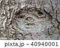 木の幹に浮かぶ少女の顔 40940001
