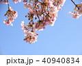 日本の桜 40940834