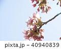 日本の桜 40940839