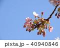 日本の桜 40940846