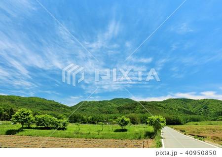 初夏の青空と新緑の風景 40950850