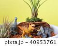 恐竜のジオラマ 40953761