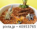 恐竜のジオラマ 40953765