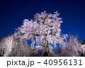 桜 春 花の写真 40956131