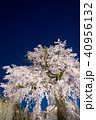 桜 春 花の写真 40956132
