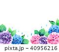 あじさい 花 植物のイラスト 40956216