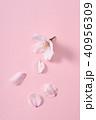 桜 ソメイヨシノ 春の写真 40956309