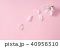 桜 ソメイヨシノ 春の写真 40956310