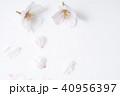 桜 ソメイヨシノ 春の写真 40956397