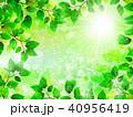 新緑 フレーム 葉のイラスト 40956419