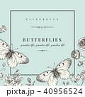 背景 蝶 カードのイラスト 40956524