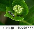 蟻 マクロ撮影 40956777