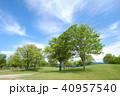 公園 新緑 青空の写真 40957540