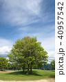 公園 新緑 青空の写真 40957542