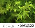 葉 グリーン 緑の写真 40958322