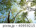 植物 新緑 若葉の写真 40959215