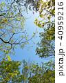 植物 新緑 若葉の写真 40959216