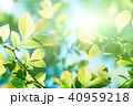 植物 新緑 若葉の写真 40959218