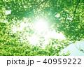 植物 新緑 若葉の写真 40959222