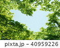植物 新緑 若葉の写真 40959226