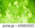 新緑 若葉 葉の写真 40963035
